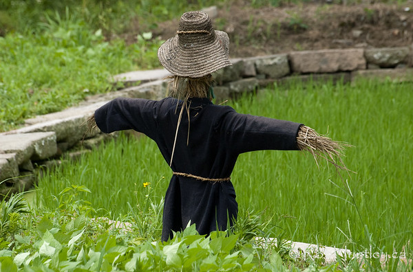 Scarecrow in a rice paddy in Wuzhen, China. © Rob Huntley