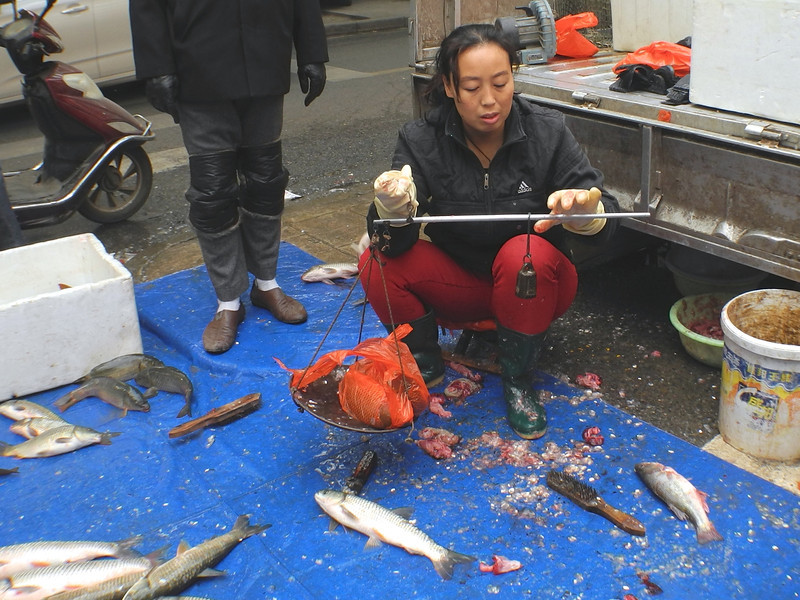 Weighing out live carp on the street