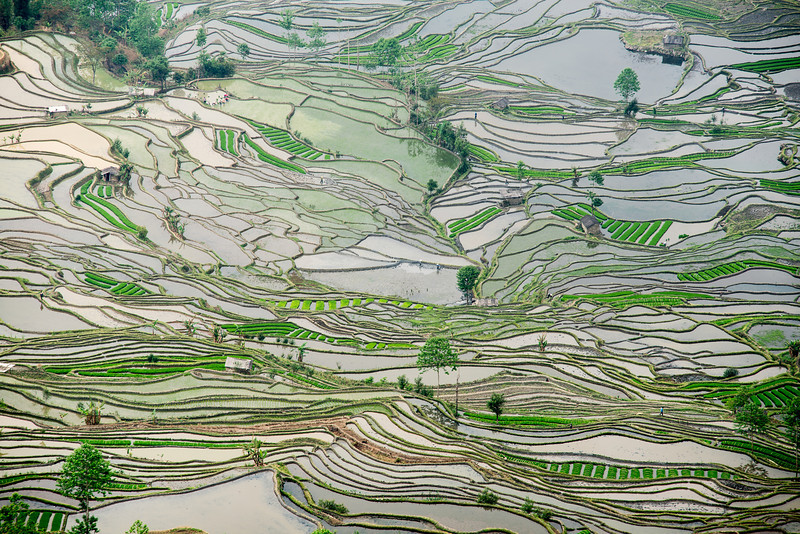 Hani rice terrace, Yuanyang