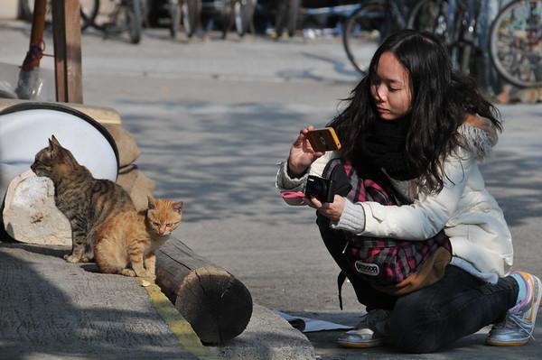 Hong Kong - Tai O Fishing Village - Cat pic