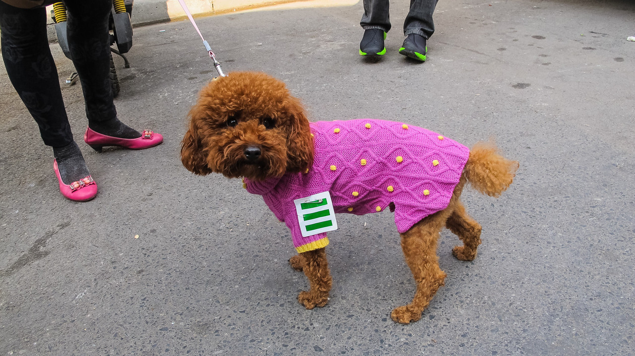 A dressed up puppy. The three lines means that this puppy is at the top of her class in doggy school. Now that's a progressive education system!