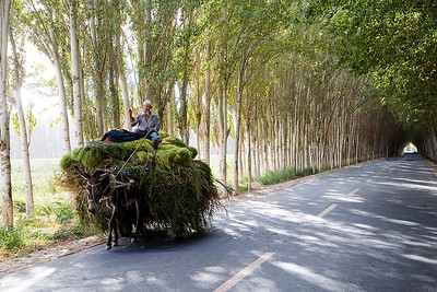 A Common Form of Transport in Xinjiang