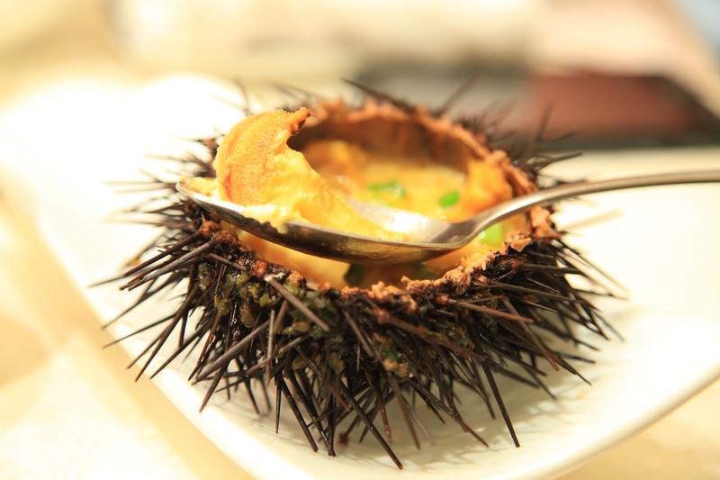 Sea urchin - Qingdao