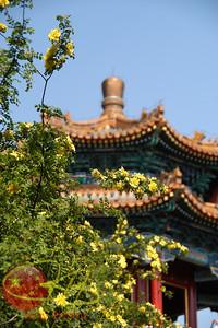 Jingshan flowers.