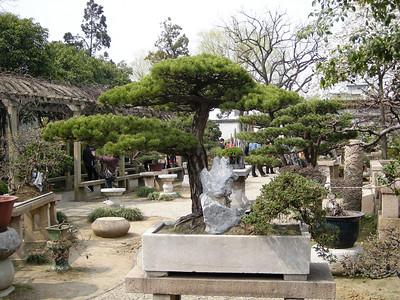 Lingering garden 700 year old banzai garden