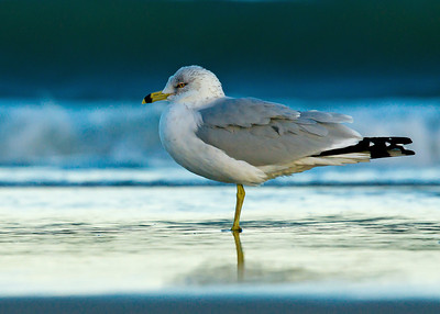 Seagull mean looking