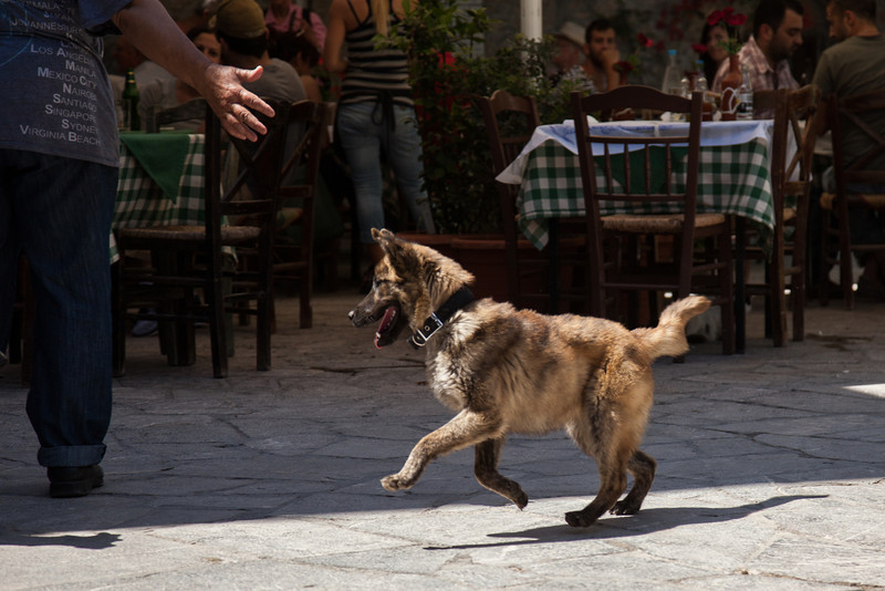 Happy dog, Mesta, Chios Island, Greece