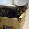 Mew needs boxhab.