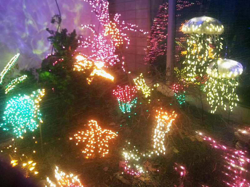 Garden d'Lights festival at Bellevue Botanical Garden. Very cool light arrangements.