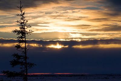 Pine & Sunset