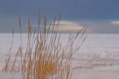 Frozen Grass on Hudson Bay