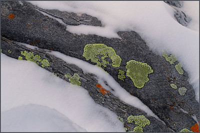 Lichen River 2