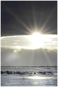 Arctic Sunflare