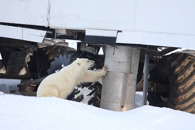 The gray water used to simply pour out--attracting the bears. Now it's enclosed.