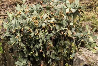 Tropical cactus like plant growing on the rocks