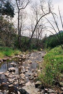 4/3/05 Arroyo Sequit, Grotto Trail