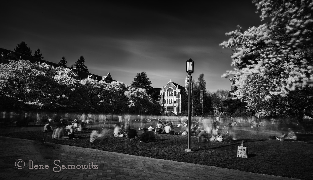 3-30-13 At the Quad at University of Washington.  This area is known for the cherry blossoms.  I heard that the trees were in bloom so Doug and I went to do some long exposures.  Unknown to us, there was an article about the blossoms on the front page of thevSeattle Times.  So the area was teeming with people.  This is a 5 min plus exposure converted to black nd white.  See all the ghosting?  Tell me whether you like this and find this effect interesting?  I am doing a lot of experimentation with long exposures for my class.