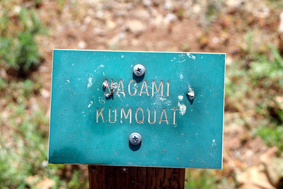 7/18/09 Marker for Nagami Kumquat at the Varietal Grove (featuring at least 75 varieties of citrus). California Citrus State Park, Riverside, CA