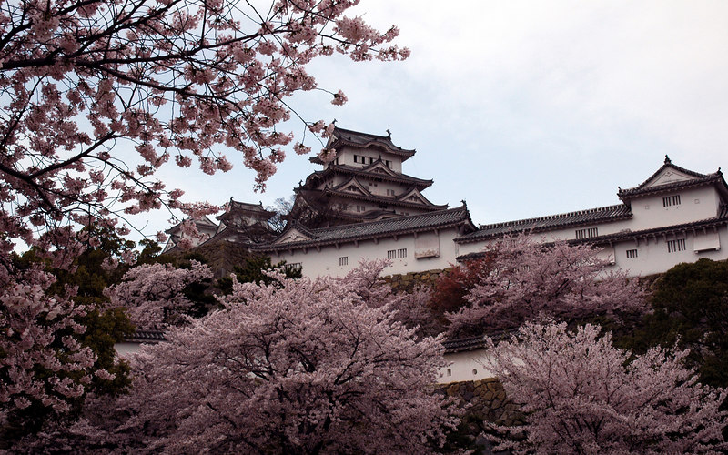 April 14th, 2006.<br /> Himeji castle with sakura in full bloom
