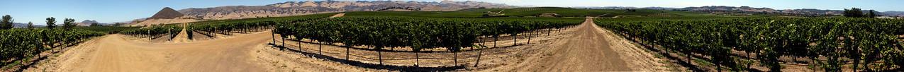 Baileyana vineyard panorama (San Luis Obispo, CA).