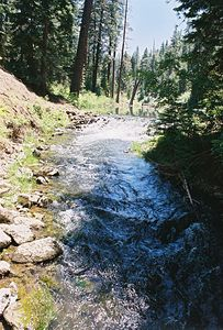 7/4/05 Mill Creek along Clear Lake Loop Trail, South Warner Wilderness, Modoc National Forest, Modoc County, CA