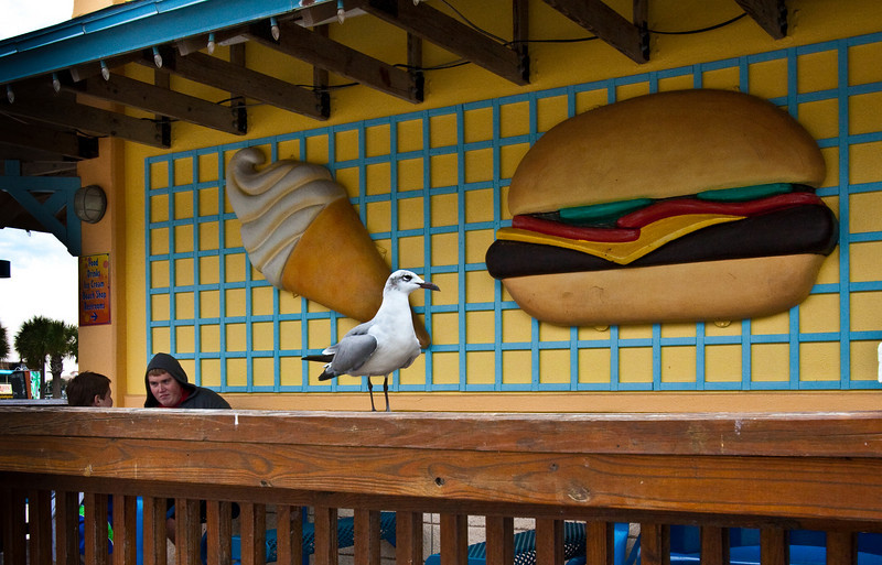 Seagull waiting for someone to offer food. Photo processed using Lightroom.
