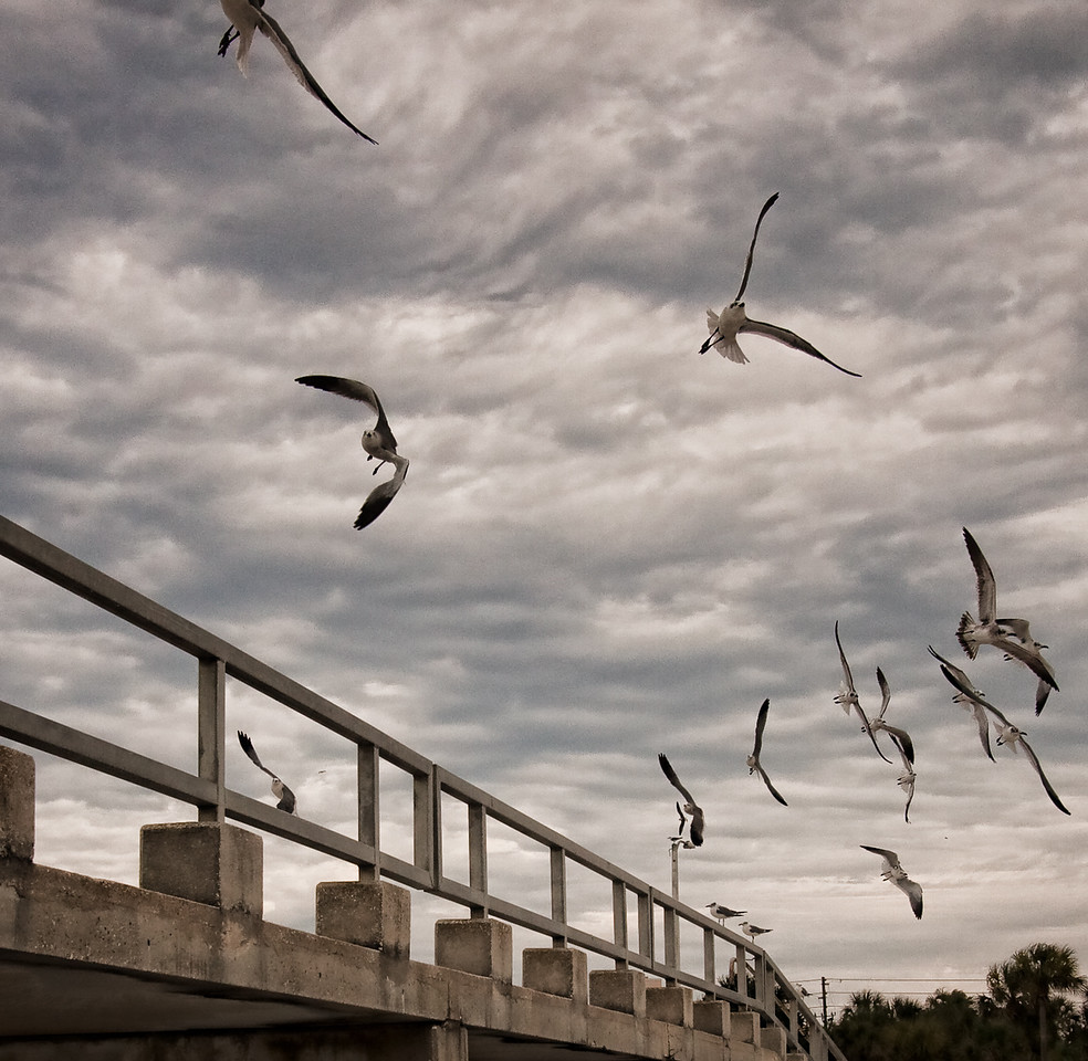 Gulls in Flight. Photo processed using Lightroom.