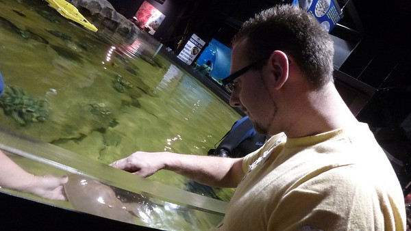 Dan touching the horseshoe crab