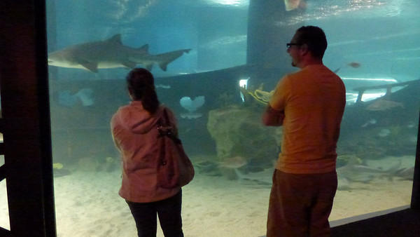 Tracy and Dan in front of big shark tank.