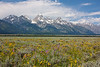 The late spring meant wildflowers were still blooming in the Jackson Hole valley.