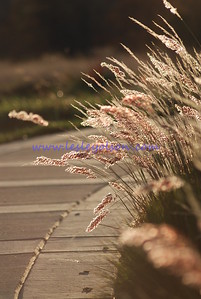 National Arboretum in DC.  *File is less than 2MB so I would not recommend ordering prints much larger than 8x10.