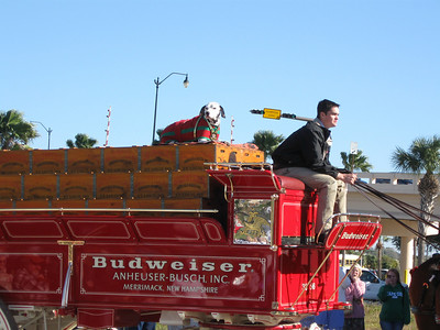 Clydesdales in Venice FL, 2010