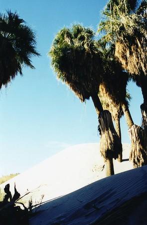 Coachella Valley Preserve: Trips