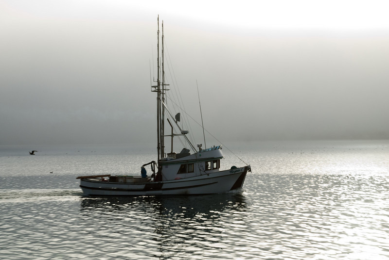 Not Lake Eerie, but Bodega Bay harbor in the fog: a fishing boat heading out for work.