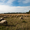 A herd of sheep along the way.