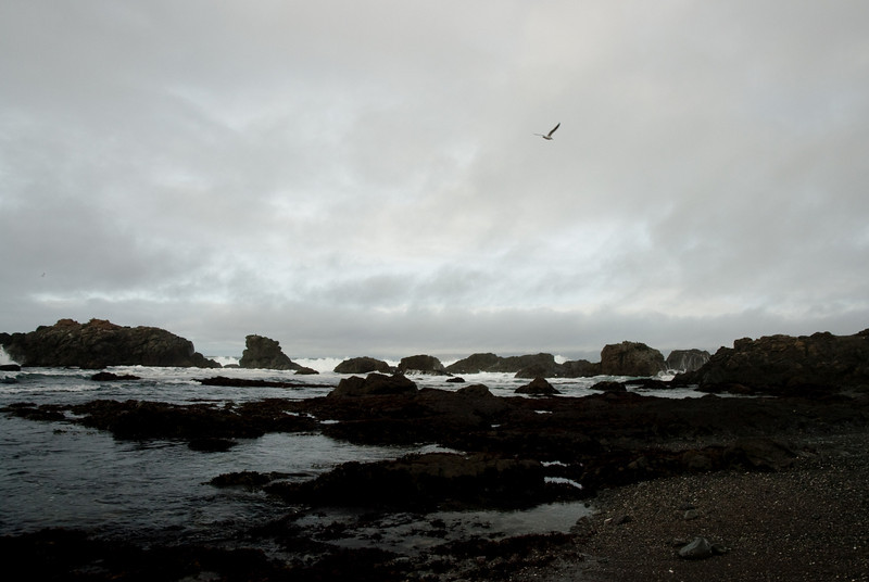Rocky beach at MacKerricher State Park, a few miles north of Fort Bragg.