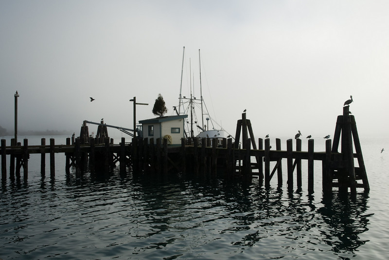 "Bodega Bay harbor - see why Alfred Hitchcock decided to shoot ""The Birds"" (but not with a gun) in this quaint little North California town?"