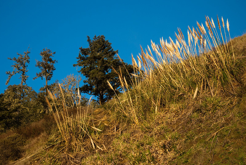 Same spot - a grassy hill illuminated by the afternoon light.