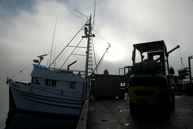 Fishermen unloading their boat in Bodega Bay.