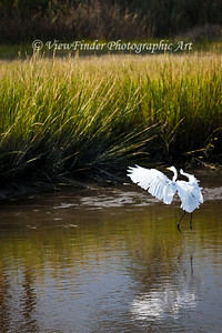 If you try, you may be able to hear the music this egret appears to be dancing to...