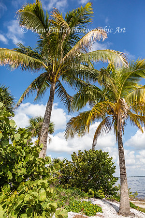 Palms In Paradise