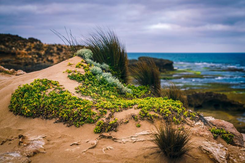 Delicate Coastal Flora