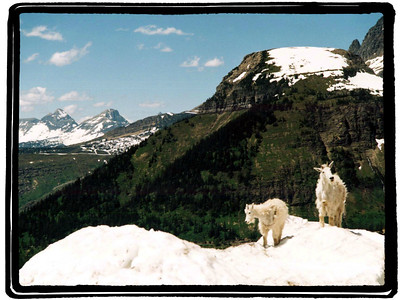 Logan Pass Favorites
