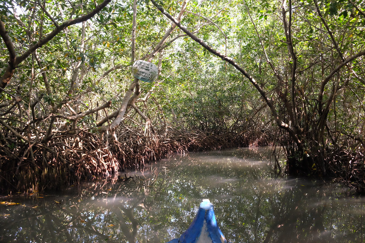 One of seven passages into the mangroves.