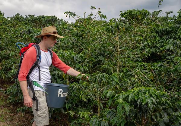 Steve Picking Coffee