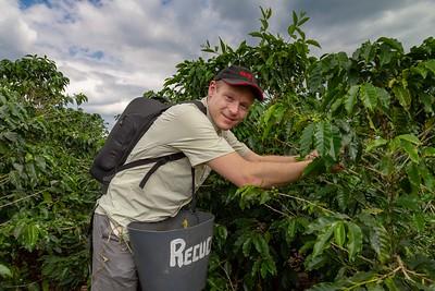 David Picking Coffee