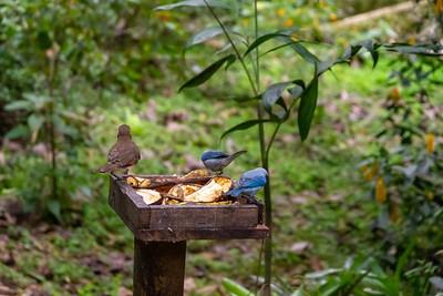 Native Bird Life at the Mariposario - Coffee Region, Colombia