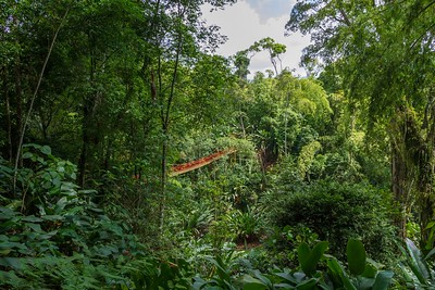 A Visit to the Mariposario - Coffee Region, Colombia