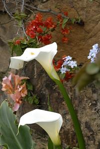 Flores6_LND0160