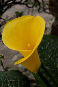 Flor10_LND0183